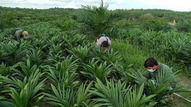 Photo of Hilirisasi Produk Kelapa Sawit di Kaltim Terganjal Infrastruktur