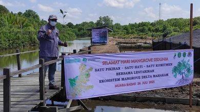 Photo of Jalan Tengah Menyikapi Mangrove Delta Mahakam yang Berkurang 3 Ribu Hektare per Tahun