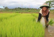 Photo of Padahal Bawa Untung, Sektor Pertanian Kukar Jarang Dilirik Milenial