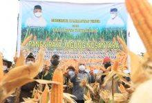 Photo of Menilik Potensi Revolusi Jagung di Kota Raja